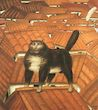Botero - Cat on the Roof 1976, the picture